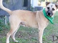 Denver's story This 10 month black mouth Cur is ready