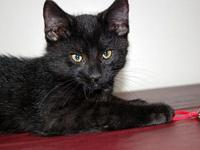 Denzel's story If you are interested in adopting an