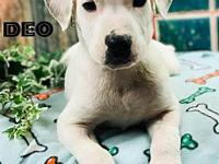 Deo's story Handsome Deo! This young mixed breed puppy