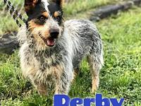 Derby's story Derby is a handsome, 2 year old, male,