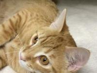 Derby's story I am Derby, a handsome orange tabby who