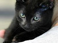 Derrick's story Meow! My name is Derrick and I am a