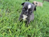 This is the runt of the litter so im thinking she will