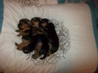 Three darling babies girls are available from our