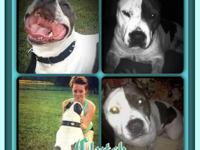Celebrity Pups is family owned and located in Bassett,
