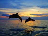 Come cruise aboard Destin's Original Dolphin and Sunset