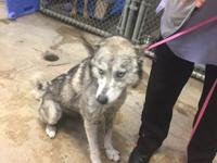 Destiny is a 6 year old,  Husky mix. Wonderful with