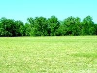 Established Land in High Springs, Florida. Asking