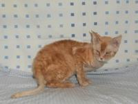 I have 4 adult Devon Rex felines were placing with an