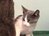 My story -- -- Kitten Division Adoption Center, 996C