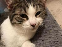 Dexter's story Lovey, Playful, Purr Machine Although
