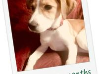 Dexter is from Brookhaven, MS. He is 2-3 months old,