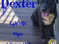 Dexter's story You can fill out an adoption application