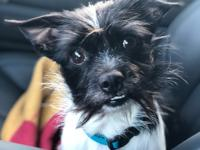Dexter is a 3 year old male terrier mix. He came to us