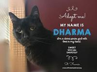 Dharma's story You can fill out an adoption application
