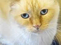 My story Hi, my name is Dhyana. I am a flame point