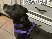 Diamond's story You can fill out an adoption