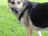 Diamond's story Diamond is a very sweet 5-6 year old