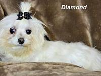 Diamond's story Please contact Constance