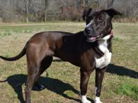 Diamond is a nice 2-3 year old Mixed Breed dog,