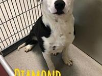 My story Diamond is a 7-8 month old lab/border collie