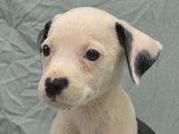 Dianne's story Six 6 week old puppies were abandoned at