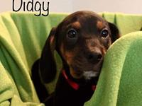 Didgy's story All SAAP animals are vet checked, UTD on