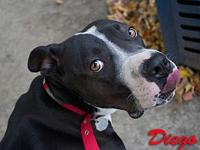 Diego's story Hi my name is Diego! I am a rescue dog