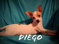 Diego's story Diego 4 months old 5 lbs. Diego loves