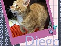 Diego's story Diego is a sweet energetic young orange