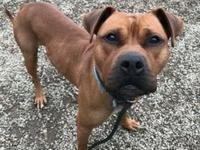 Diesel's story !!! AVAILABLE for Adoption at ACCT