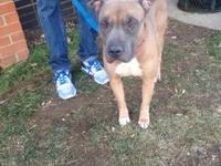 Diesel's story !! Located at ACCT Philly, 111 W Hunting