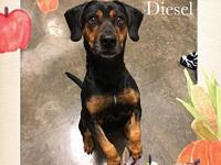 DIESEL's story Diesels the name; and like my name, Im