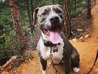 Diesel - courtesy listing's story All people inquiring