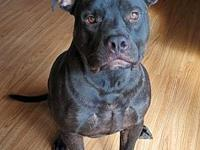 My story Diesel James is a  2 year old male. He needs