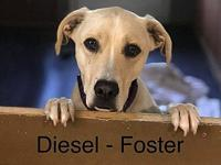 Diesel's story Look at this face!! Doesn't it melt your