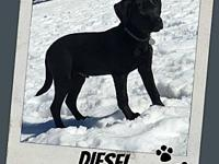 DIESEL's story *More information coming soon on