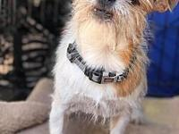 Digby's story This scruffy fellow is Digby! He is a