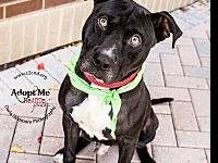 Dill's story Meet Dill! This boy is a heart melter! He