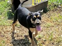 Dill's story Our pets are physically located and