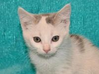 Dill - MEET ME @ PETCO's story This kitten is already
