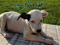 Dillon's story This pup is physically located in NC