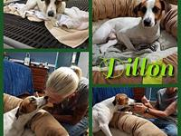 DILLON's story Dillon is ready for a family of his own