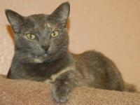 Dilute Calico - Bethanee - Medium - Adult - Female -