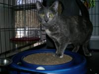 Dilute Calico - Katniss - Medium - Young - Female -