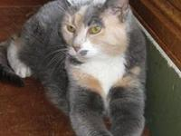 Dilute Calico - Reese - Medium - Adult - Female - Cat