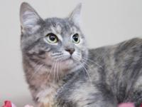 Dilute Tortoiseshell - Lucy - Small - Senior - Female -