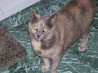 Dilute Tortoiseshell - Ms. Beans - Large - Adult -