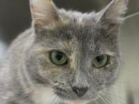 Dinah! She is a beauty with a soft soft coat. Dinah is