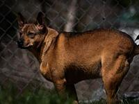 Dingo's story Dingo is a lot like his kennel sweetheart